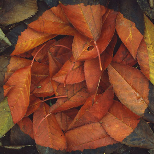 Andy Goldsworthy Digital Catalogue